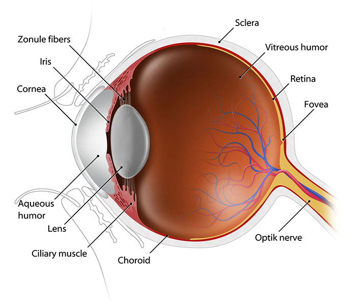 Cataract & Small Incision Cataract Surgery: A cataract is a clouding of the eye's naturally clear lens. When the lens becomes cloudy, light cannot pass through it easily, and vision is blurry. Cataract development is a normal process of aging.